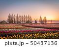 あけぼの山農業公園 チューリップ 50437136