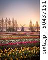 あけぼの山農業公園 チューリップ 50437151