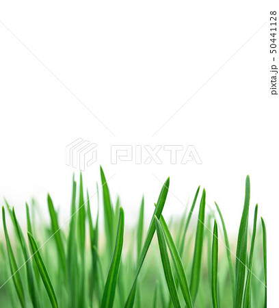 Spring or summer natural background with fresh 50441128