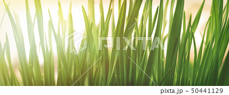 Spring or summer natural background with fresh 50441129