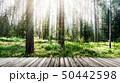 Forest sunrise outdoor landscape 50442598
