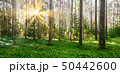 Forest nature background 50442600