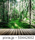 Ecology background outdoor landscape 50442602