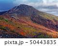 紅葉 秋 茶臼岳の写真 50443835