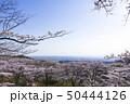加護坊山 千本桜 宮城県 大崎市 桜 春 50444126