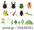 かわいい夏の昆虫イラスト素材集 50446561