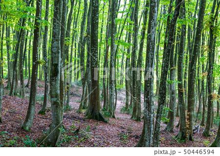 新緑の美人林 50446594