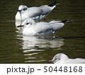 冬 白色 黒色の写真 50448168