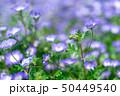ネオフィラ 紫 50449540