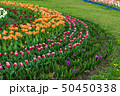 Spring fields of blooming tulip. Beauty outdoor 50450338