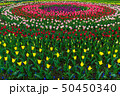 Spring fields of blooming tulip. Beauty outdoor 50450340