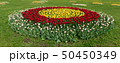 Spring fields of blooming tulip. Beauty outdoor 50450349
