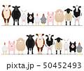 家畜のボーダー 全身 50452493