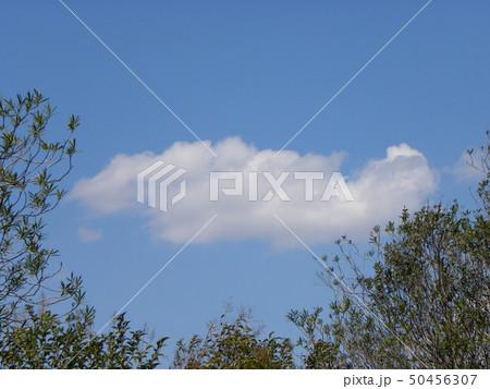 春の青空と白い雲 50456307