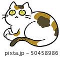 動物 猫 三毛のイラスト 50458986