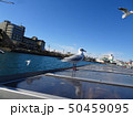 浜名湖のユリカモメ 50459095