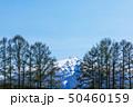 (青森県-風景)りんご農園から望む岩木山3 50460159