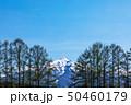 (青森県-風景)りんご農園から望む岩木山1 50460179