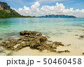 coral on beach with mountian background focus on 50460458