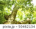 木々 50462134