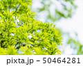新緑 50464281