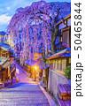 風景 通り 観光の写真 50465844
