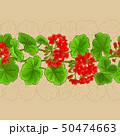 geranium vector pattern 50474663