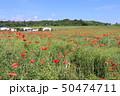 コクリコ畑 50474711