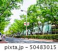 東京 表参道 50483015