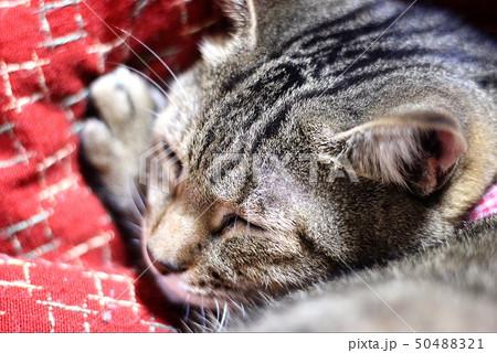 子ネコは夢の中 50488321