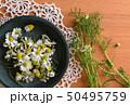 皿に入れたカモミールの花、室内 50495759