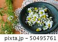 皿に入れたカモミールの花、室内 50495761