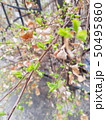 Spring tree branches with green and brown leaves 50495860
