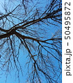 Blue sky light with tree branches silhouettes 50495872