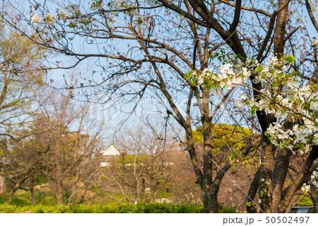 都会のオアシス 春の大濠公園の桜【福岡県】 50502497