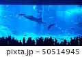 츄라우미수족관의 거대한 수조 안에서 헤엄치는 고래상어와 물고기 50514945