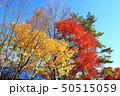 秋の八ヶ岳山麓 清里高原 50515059