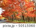 秋の八ヶ岳山麓 清里高原 50515060