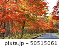 秋の八ヶ岳山麓 清里高原 50515061