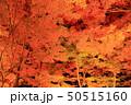 山中湖・旭日丘湖畔緑地公園 夕焼けの渚・紅葉まつりライトアップ 50515160