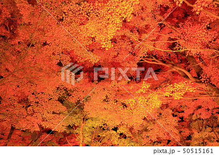 山中湖・旭日丘湖畔緑地公園 夕焼けの渚・紅葉まつりライトアップ 50515161