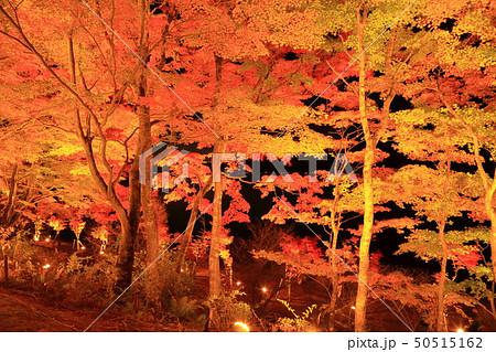 山中湖・旭日丘湖畔緑地公園 夕焼けの渚・紅葉まつりライトアップ 50515162