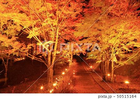 山中湖・旭日丘湖畔緑地公園 夕焼けの渚・紅葉まつりライトアップ 50515164