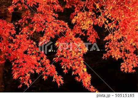 山中湖・旭日丘湖畔緑地公園 夕焼けの渚・紅葉まつりライトアップ 50515165