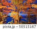 山中湖・旭日丘湖畔緑地公園 夕焼けの渚・紅葉まつりライトアップ 50515167