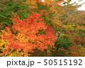 山中湖・旭日丘湖畔緑地公園 夕焼けの渚・紅葉まつり ライトアップ 50515192