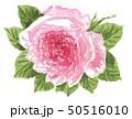 ローズ19507pix7 50516010