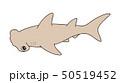シュモクザメ Hammerhead 50519452