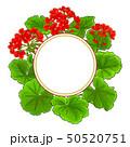 geranium vector frame 50520751