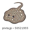 淡水エイ ダイヤモンドポルカドットスティングレイ モトロ Stingray 50521955